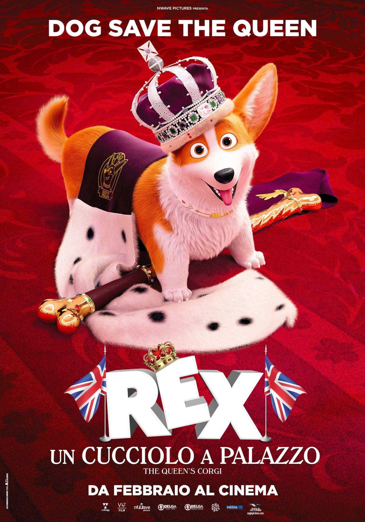 rex cucciolo palazzo